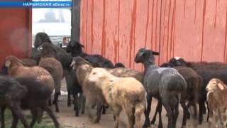 """Неизвестные существа """"чупакабра"""" держат в страхе жителей Кочкорского района"""