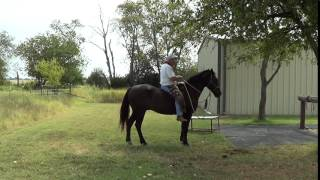 riding mr t bareback for short demo no pad or saddle is hard on a horse s back