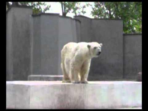 Teddy The Baunsing Bear