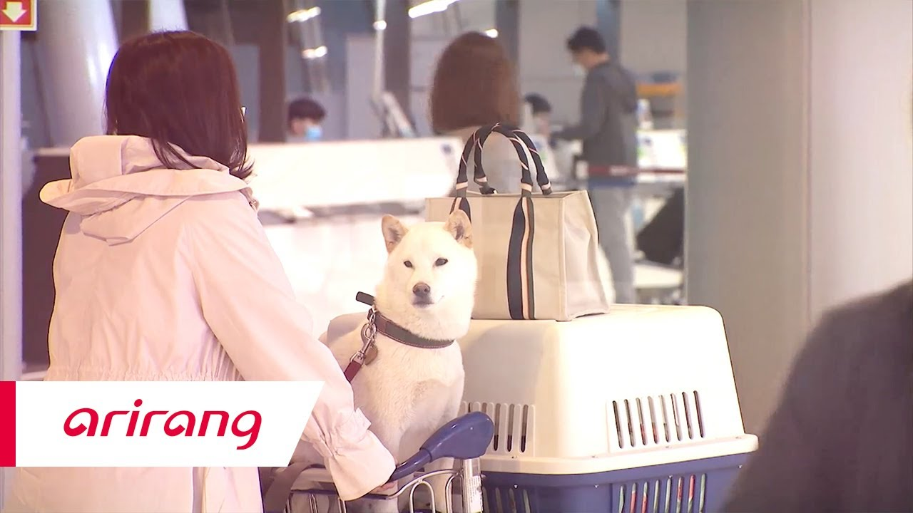 [Arirang TV] Hot weather coupled with the pandemic