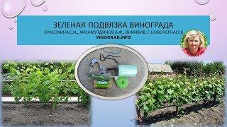 Зеленая подвязка винограда, Красохина СИ, Хисамутдинов АФ