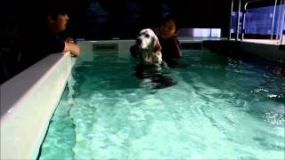 犬のスイミング・リハビリテーションや筋力強化はQOLAで 152-0022 東京...