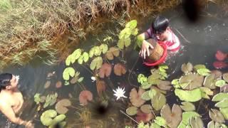 Bắt cá lia thia và cá rô đồng - Tiếp đón Fan sbnn ALA tập 1