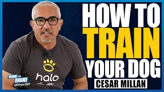 How Cesar Millan, The Dog Whisperer trains his own dogs