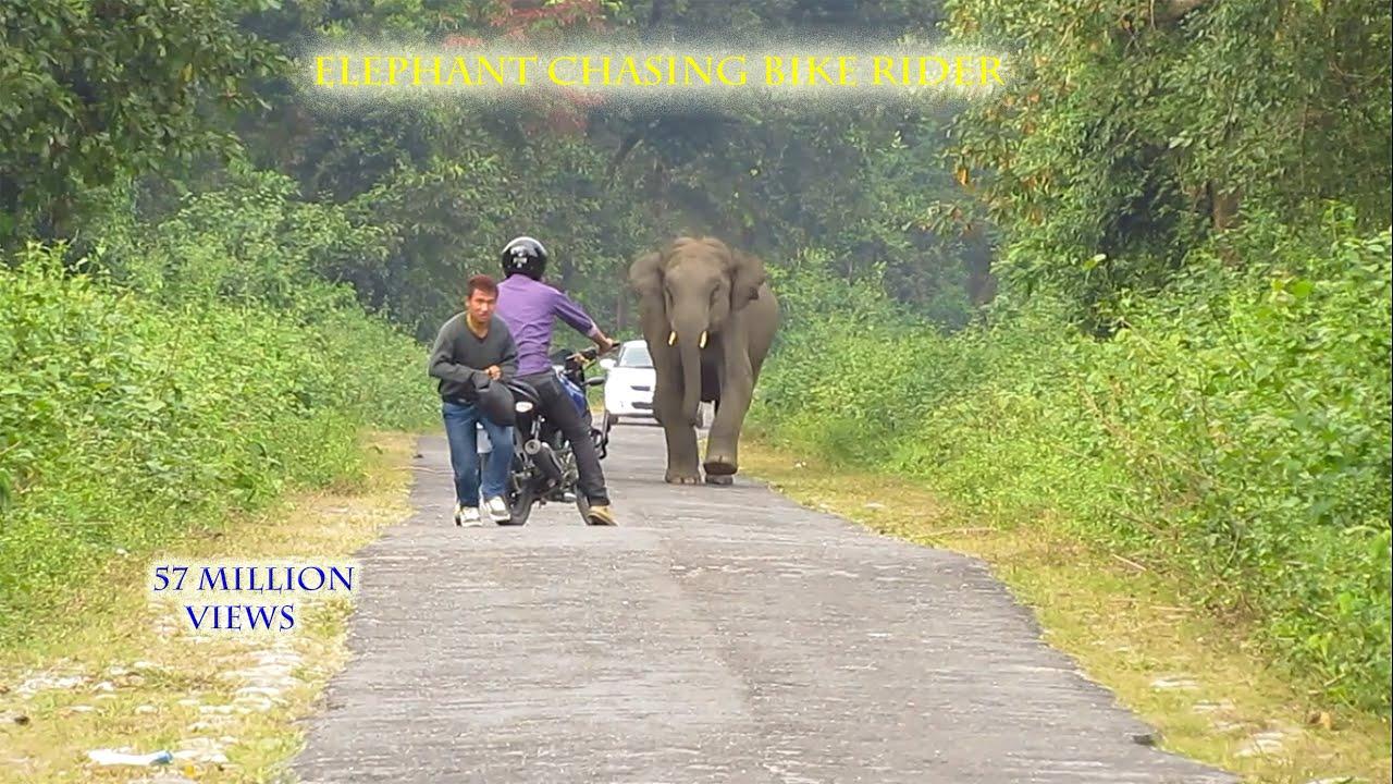 מפחיד: כשפיל רודף אחריך באמצע כביש צר