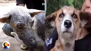 Sick Dog Transformed After Being Rescued off the Street | The Dodo
