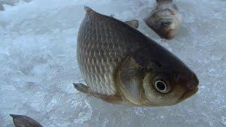 Зимняя рыбалка 2015✔ (Дневник рыболова).