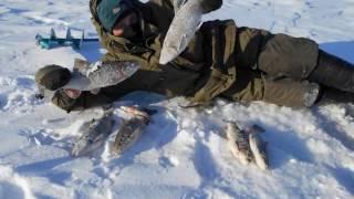 Зимняя рыбалка в Самарской области. Проныр.ру