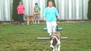 K9 Basics Dog Training