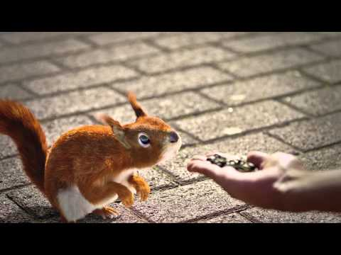 [HD] Squirrel 3d animation for sunflower seeds advertisiment