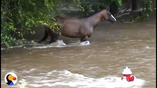 Incredible Hurricane Harvey Horse Rescue | The Dodo