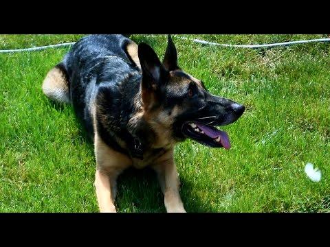 training-your-dog-using-onguard™-handheld-dog-trainer