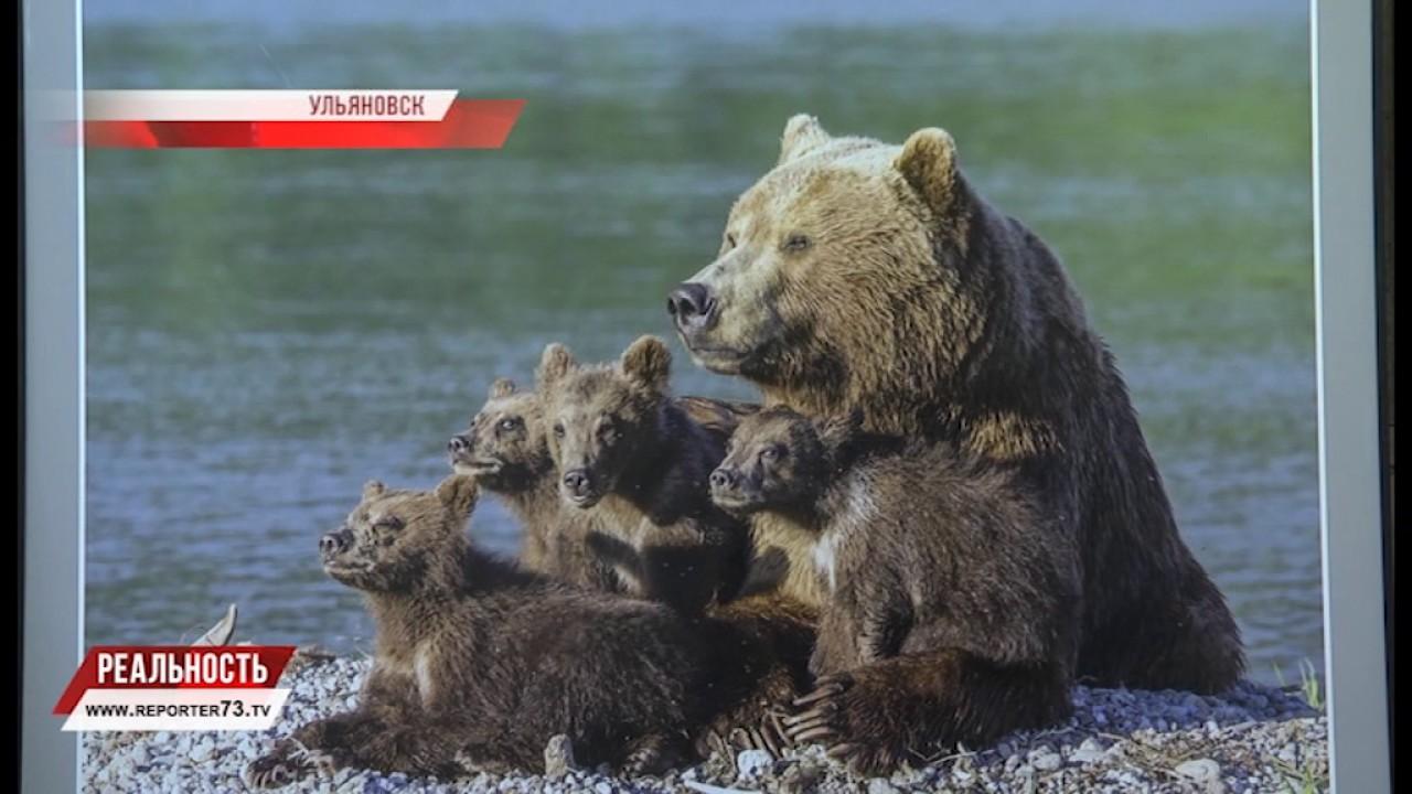 Фотоконкурс Дикая природа России 2011