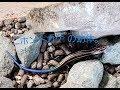 【ニホントカゲの飼育】〜飼育環境と初めての餌やり〜
