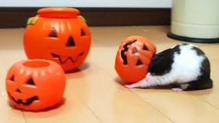 ハプニング!ハムスターの顔が抜けない10連発!おもしろ可愛いハムスターFunny Hamster's face can not escape 10 consecutive shots! thumbnail