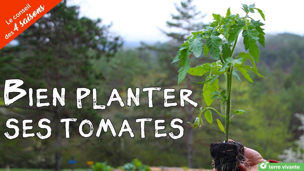 Comment bien planter ses tomates - le conseil des 4 saisons - YouTube