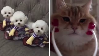 Try Not To Laugh Watching Funny Animals Compilation