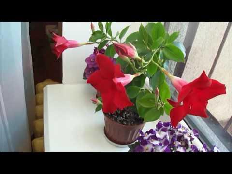 Сонник Цветы комнатные приснились, к чему снятся Цветы
