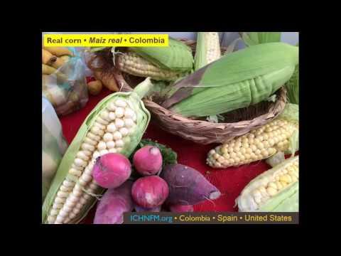 Dr. Alex Vasquez How GMO Foods Trash Your Mitochondria and Metabolism