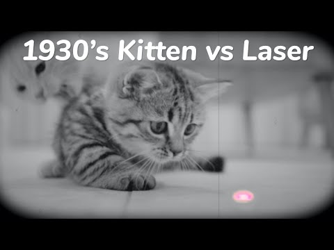 100 Years Ago Cat vs Laser Pointer – Day 75 @ Baby Kittens Day 1 to Day 100 Lucky Paws Vlogs