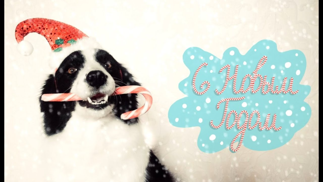 Happy New Year     YouTube Happy New Year   Jerry Border collie