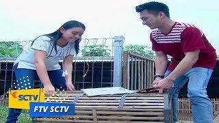 FTV SCTV - Cinta Kwek Kwek Gadis Bebek