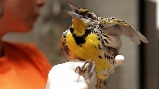 The Sad Reality Inside a Wildlife Sanctuary