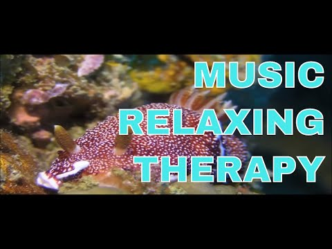 music relaxing therapy : RAJA AMPAT - INDONESIA