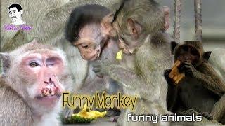 #JokePost Monkey Family - baby monkey - funny animals - funny monkey