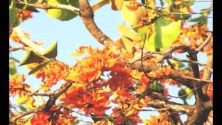 ดอกจาน - คาราบาว