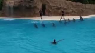 Великолепное шоу дельфинов