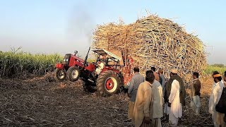 Dabung Tractor in Action | Tractor Stunt with Sugarcane loaded trolley