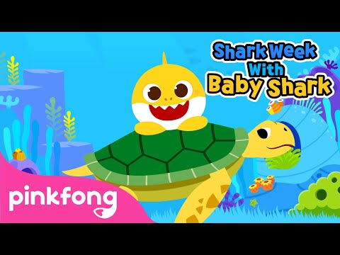 Baby Shark and Sea Turtles | Shark Week with Baby Shark | Pinkfong Songs for Children