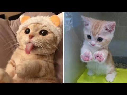 funny cute cats Videos Compilation- cutest funniest cats - omg funny! #10