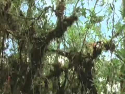 Grasslands & Tropical Forest Biomes.mov