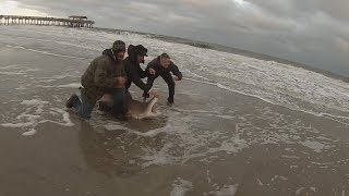 Massive Bull Reds And Huge Sand Tiger Shark Landed in Tybee