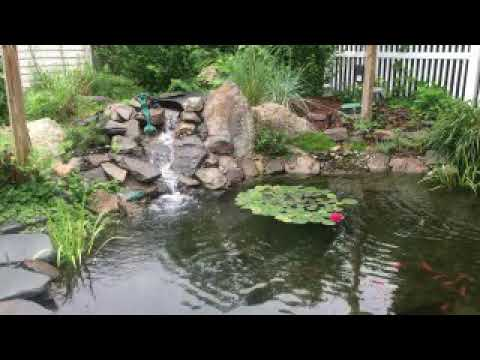 Raccoon Proof Your Pond