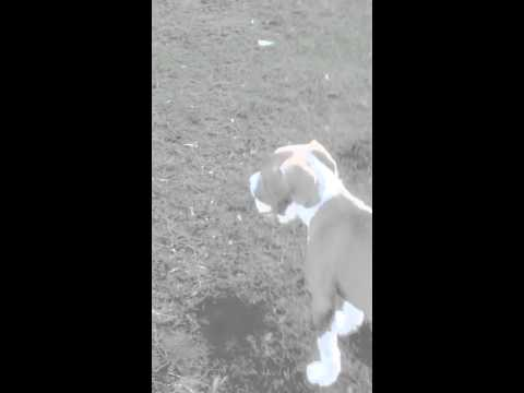 Full video of king playing fetch