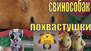 Свинособак Похвастушки/Свинка с повадками собаки/Моя Юху /Морские свинки Чижик и Пыжик