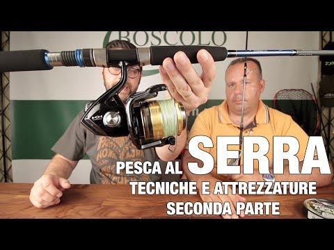 ***Pesce SERRA a spinning  (SECONDA PARTE): la pesca, i comportamenti, le attrezzature***