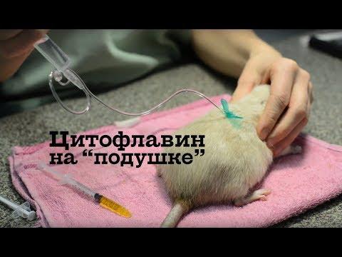 Укол крысе - цитофлавин на подушке