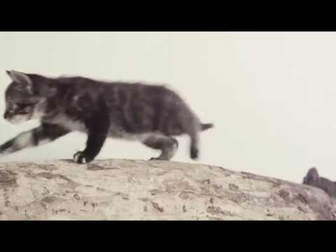 Ear Cat - Fun music game for ear training