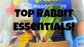 Top Rabbit Essentials! | RosieBunneh