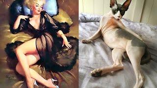 Смешные картинки про кошек и котят Выпуск №50  FUNNY CATS СМЕШНЫЕ КОШКИ