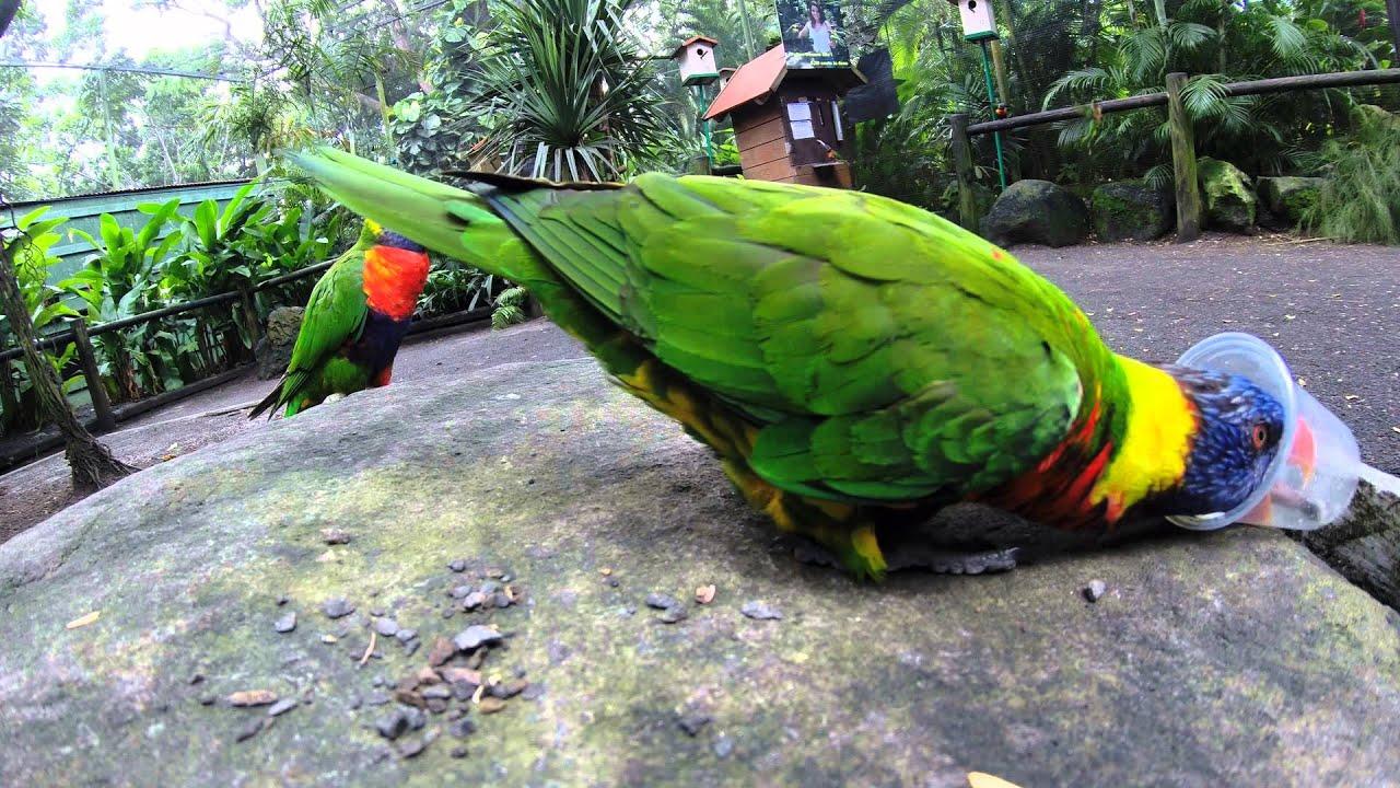 Jardin botanique de deshaies guadeloupe youtube for Jardin botanique guadeloupe