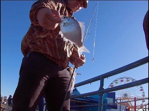 PERCH FRENZY AT Santa Monica ! Pier fishing QC Ep. 2
