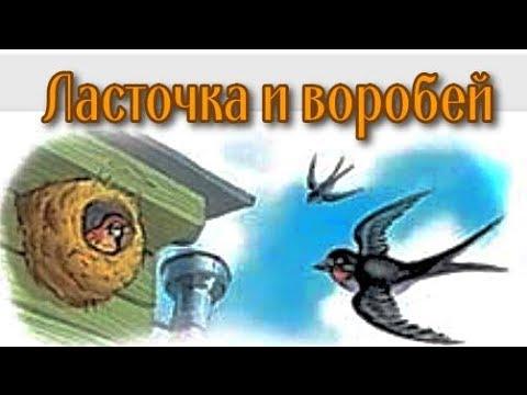 Рассказ Ласточка и воробей Л Толстой