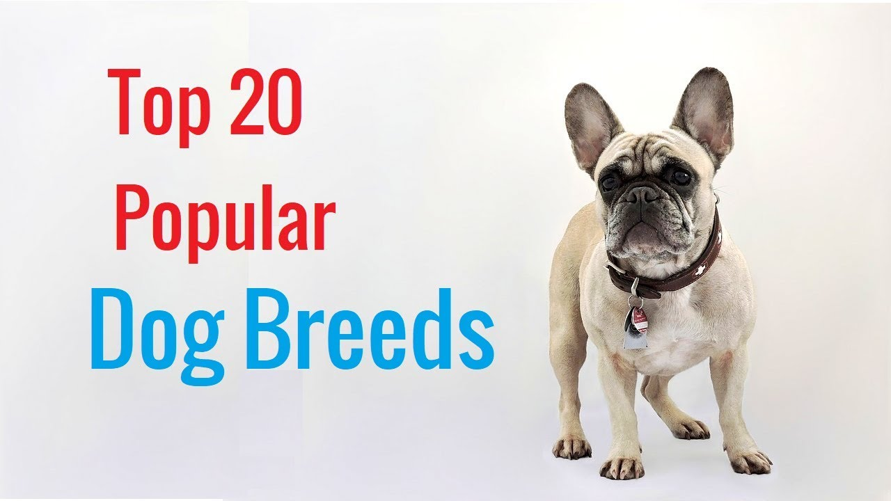 Top 20 Dog Breeds High Quality Cute Photos With Names
