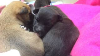Puppies Rescued From The Cold