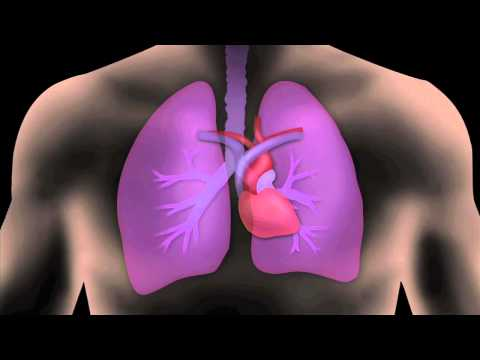 The Air We Breathe-Inside Your Lungs